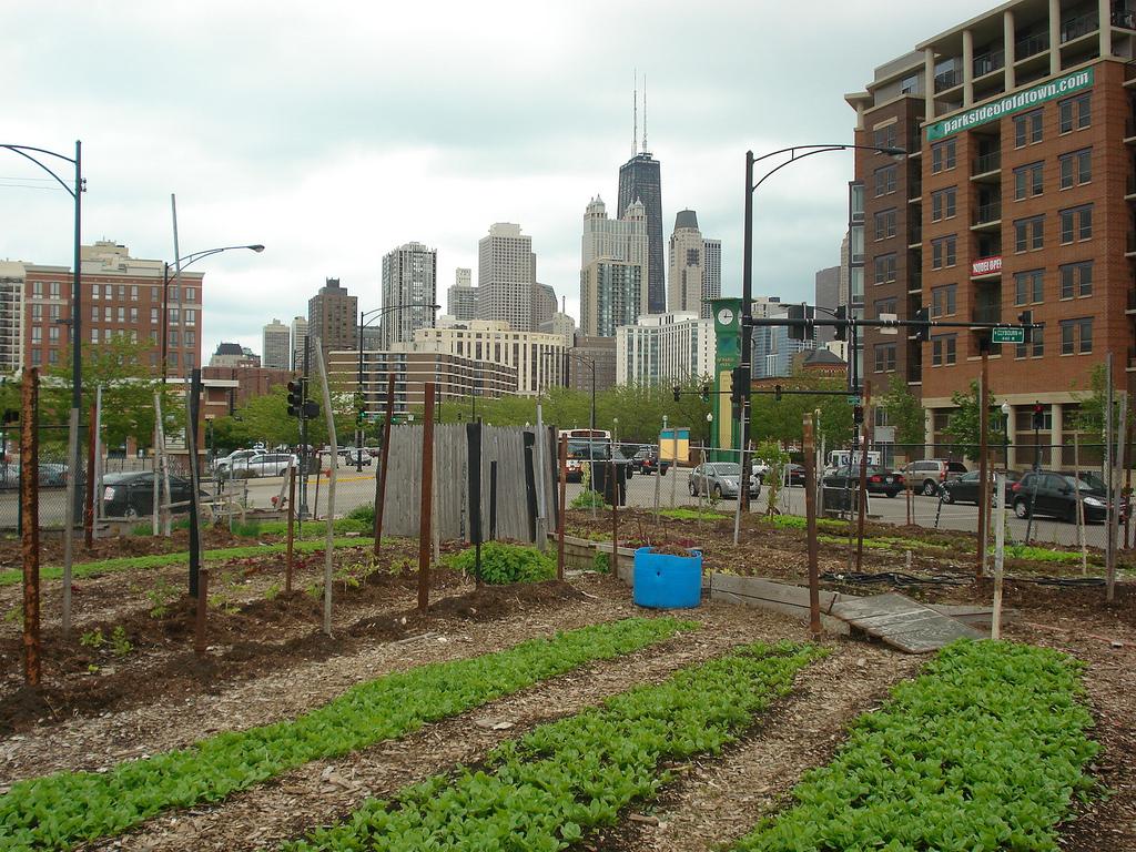 земеделие Как дигиталните технологии култивират градското земеделие Мтел Блог