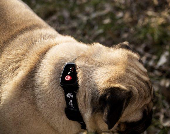 Видео ревю на умната каишка MyKi Pet