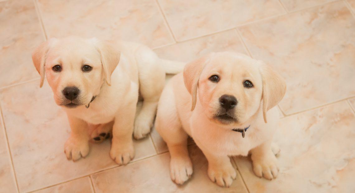 куче 5 причини да осиновиш куче водач А1 Блог