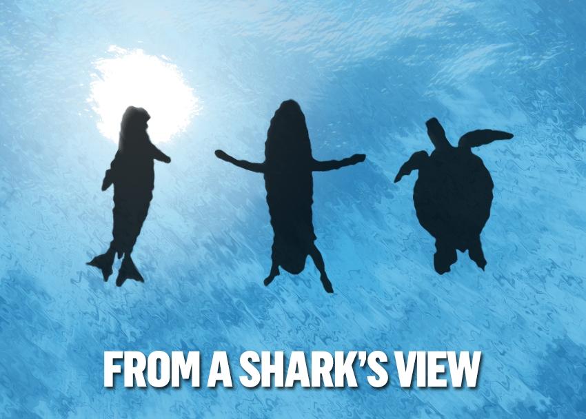 акулите Мтел и Discovery Channel тръгват по следите на акулите А1 Блог
