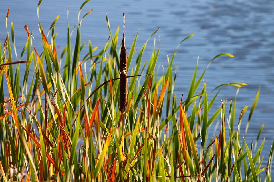 есенни снимки Да хванем в кадър цветовете на есента А1 Блог