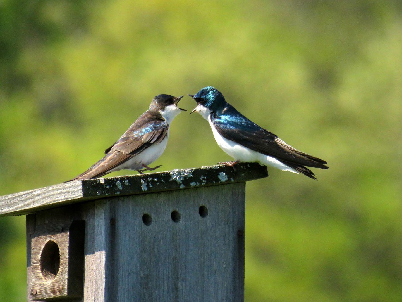 спорове Как да си спестим безсмислени спорове онлайн А1 Блог
