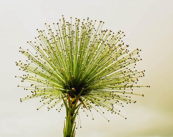цветница Цветница в приложения А1 Блог