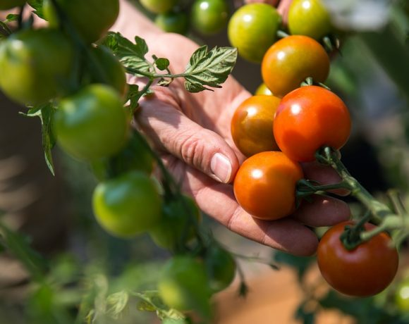 земеделие Как дигиталните технологии култивират градското земеделие А1 Блог