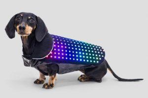 кучето Дигитални джаджи за кучето А1 Блог