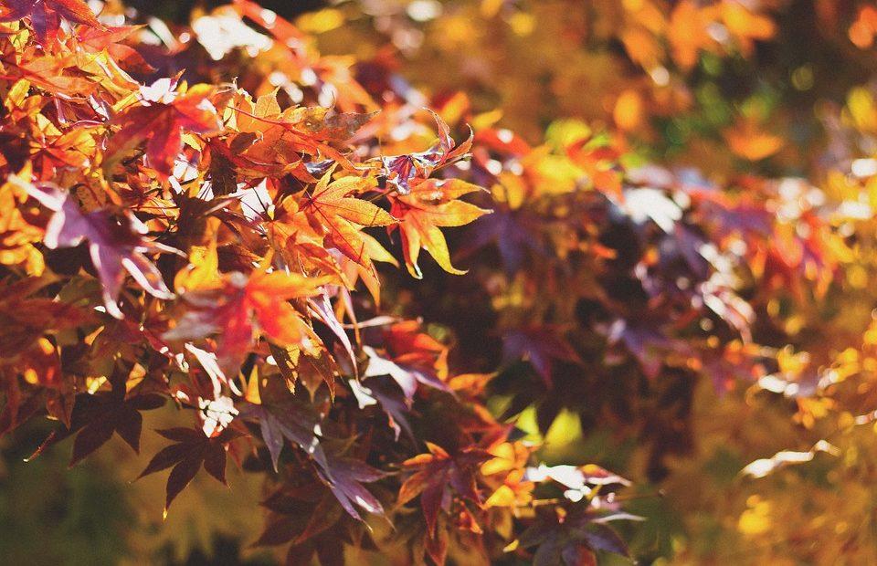 """Няколко съвета как да направим хубави есенни снимки било то със смартфон, """"сапунерка"""" или голям фотоапарат - препоръки за композициите, светлината и уникалните възможности на есента."""